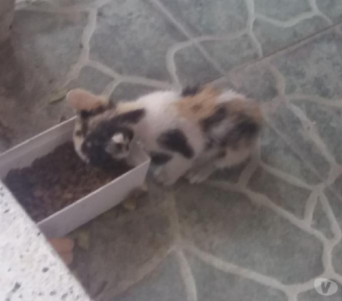 Dono gatico bebé