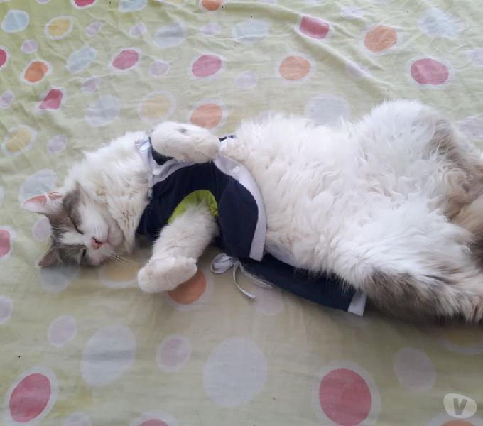 Se ofrece en adopción dos hermosas gaticas