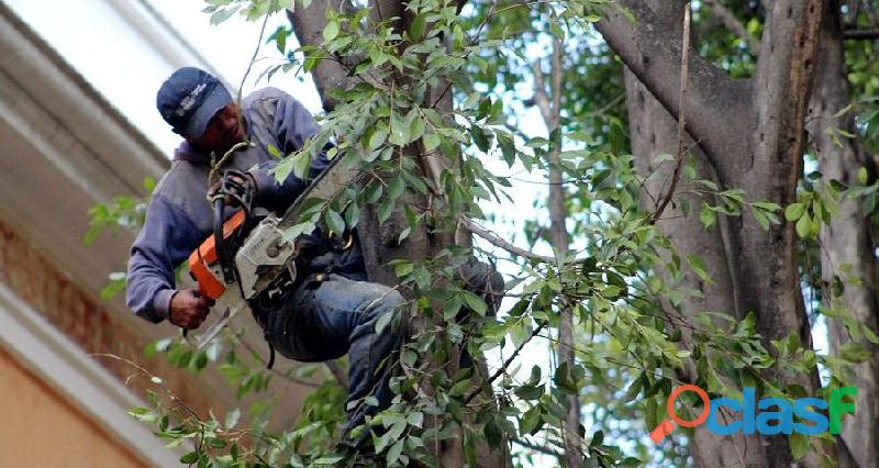 Servicio de tala de arboles,tala de arboles