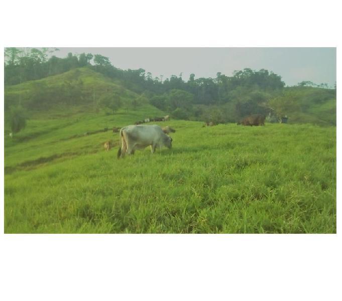 Se vende finca 35 hectáreas serca a bucaramanga productiva