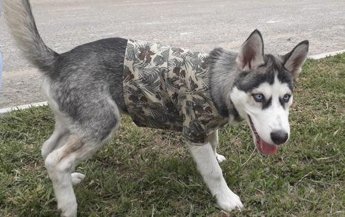 Camisa Para Perritos Estampada - kg a $24990