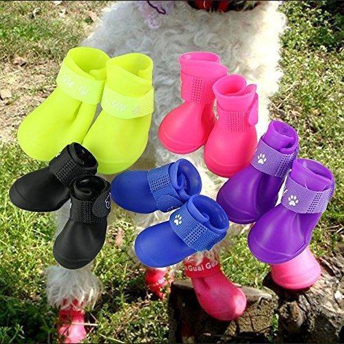 Pesp Lindo Pequeño Mascota Perro Cachorro Lluvia Nieve