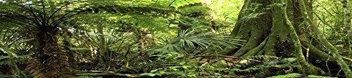Fondo de hábitat de reptiles de jaulas personalizadas de ca