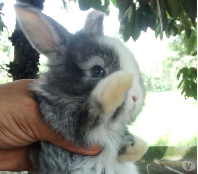 Venta de conejos gazapos y pie de cría