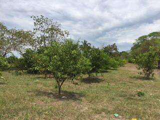 Se vende finca 18 (ha ) cultivables a 1hr de ibague