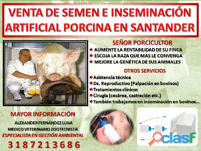 Venta de semen e inseminación artificial porcina en santander..