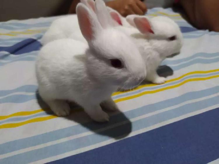 Hermosos y tiernos conejos blancos