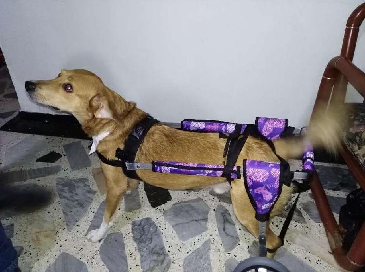 Silla de ruedas para mascotas