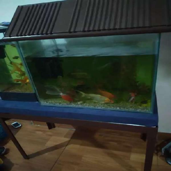 Vendo acuerio y peces
