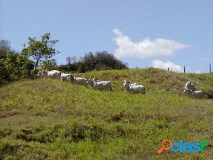 5.000 hectareas para ganaderia en puente arimena meta