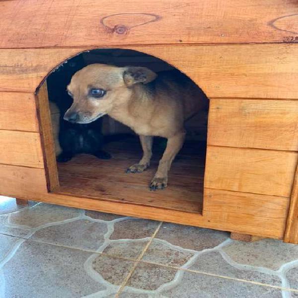 Casa en madera para perro