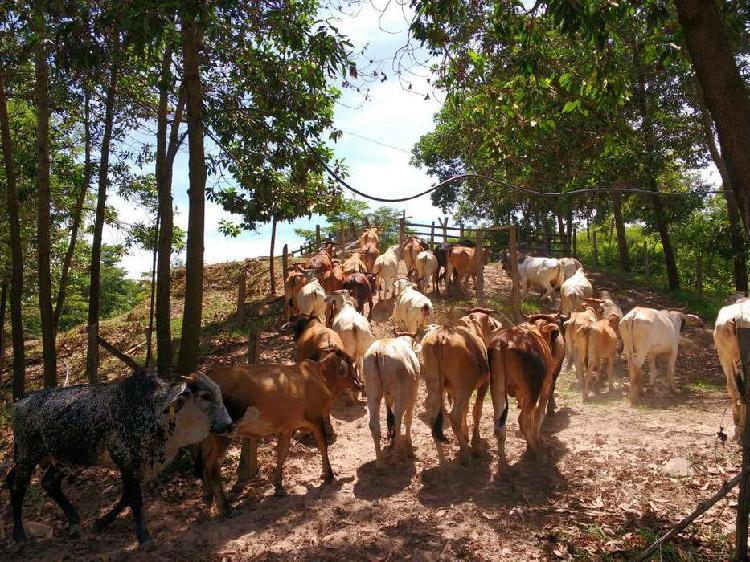Finca cucuta tibu 100 hectáreas sobre via _ wasi391083