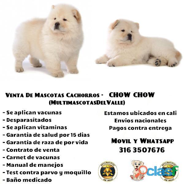 CHOW CHOW CACHORROS PUROS