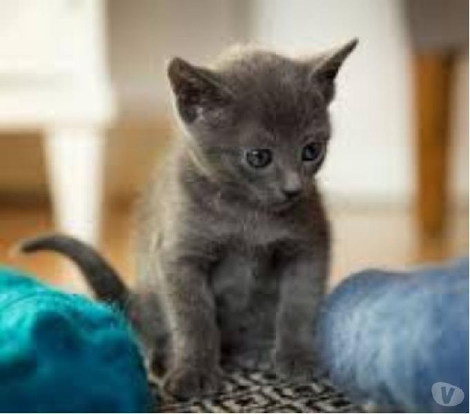 Doy en adopcion gaticos de dos meses