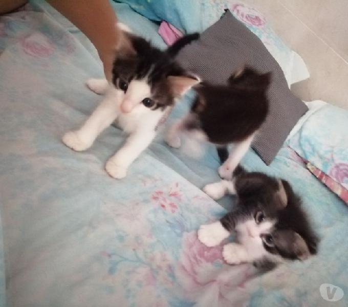 Cuatro gatitos listos para ser adoptados