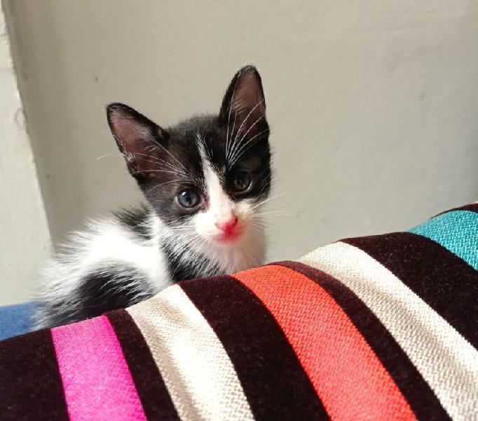 Doy en adopción a un gato