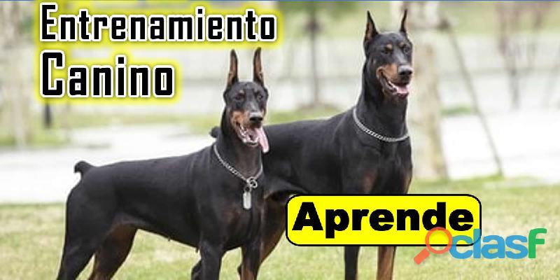 Curso De Entrenamiento Canino 20mil$ cop