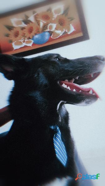 Doy perro (grande) en adopcion (preferiblemente finca)