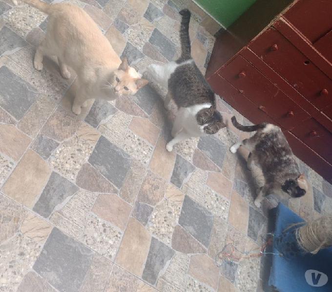 Doy en adopción gato y gatas hermosos.