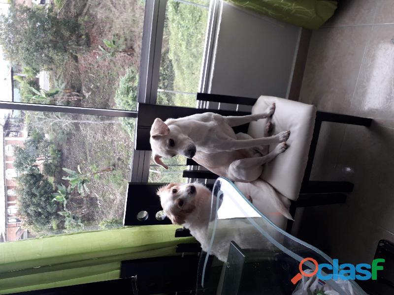 Dos perros en adopción