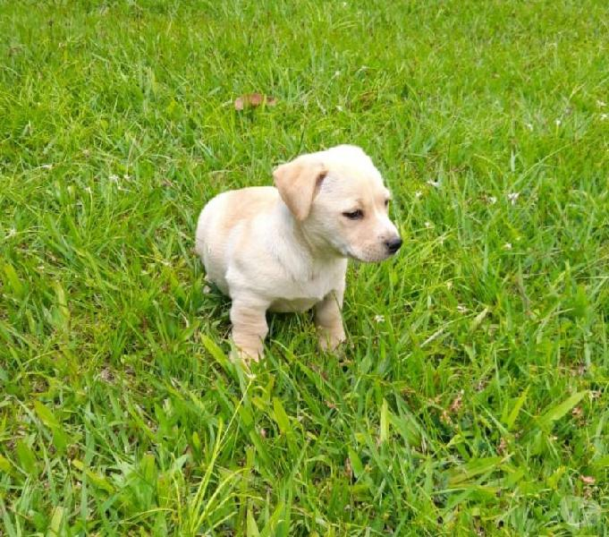 Lindos cachorros criollos buscan hogar